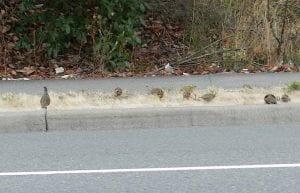 birds-crossingstreet