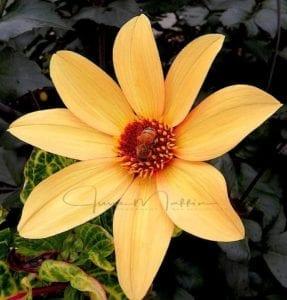 beeinflower-2