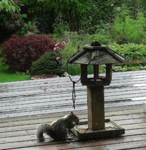 squirrel-1-dscn9676