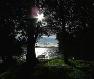 WMThink4Self-YPbenchThruTrees