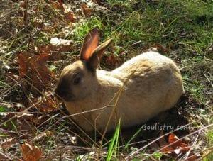 WM-Integrity-Rabbit