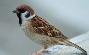 WM-Sparrow