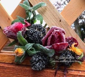 WM-frozen roses-2