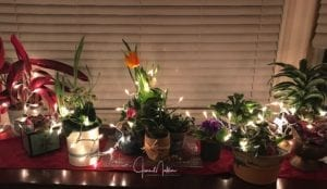 WM-EpiphanyLRflowers