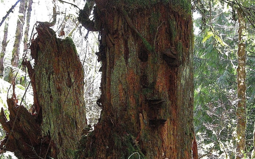 """""""FACE IN A TREE"""""""