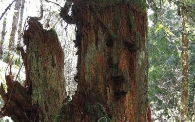 """FACE IN A TREE"""